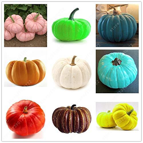 per la semina giardino di casa: 4 semi di zucca semi di zucca gigante cimelio organici semi di ortaggi 18 colori Pinkdose 20 pc//sacchetto Semi di zucca