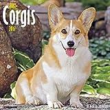 Just Corgis 2017 Wall Calendar (Dog Breed Calendars)
