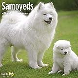 img - for Samoyeds Wall Calendar 2020 book / textbook / text book