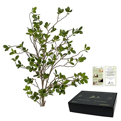 Jiji Mercantile Artificial Ficus Tree Branches 31 Inches with 2 sided Ideas and Inspiration leaflet. Beautifully designed plant greenery in premium packaging to style your home, office or wedding.