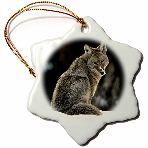 Coyote Gifts Kritters In The Mailbox Animal Items