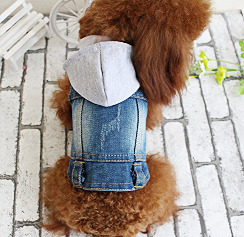 Dachshund Miniature Denim Shirt (OSPet Pet Vests Dog Denim Hoodies Dog Clothes Puppy Jacket Dog Outfit for Small Dogs XL)