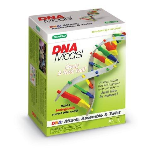 DNA Model Kit ()
