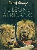 Il leone africano