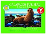 Galapagos Fur Seal, Victoria Sherrow, 1607276135