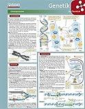 Lerntafel: Genetik im Überblick (Lerntafeln Biologie)