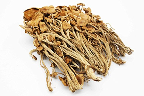 Selected Dried Food Tea Plant Mushrooms /Fungus 茶樹菇 FREE worldwide AirMail