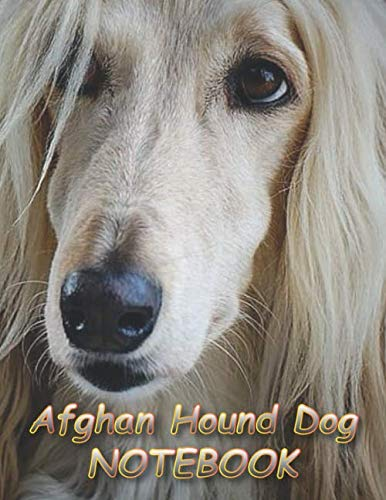 """Afghan Hound Dog NOTEBOOK: Notebooks and Journals 110 pages (8.5""""x11"""")"""
