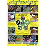 Laminated Butterflies Life Cycle Mini Poster 40x60cm