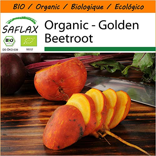 SAFLAX - Garden in The Bag - Organic - Golden Beetroot - 50 Seeds - with Cultivation Substrate in an Easy to Handle Stand up Bag. - Beta vulgaris