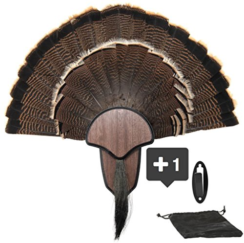 New Age Taxidermy Premium Turkey Fan Mount with Head Honcho European Mount