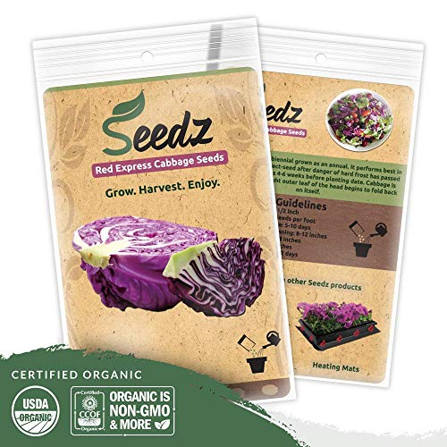 Organic Cabbage Seeds (APPR. 550) Red Express Cabbage - Heirloom Vegetable Seeds - Certified Organic, Non-GMO, Non Hybrid - USA