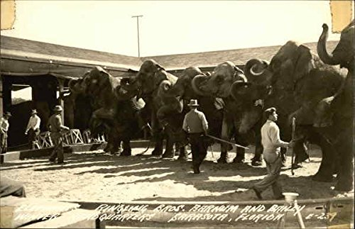 Ringling Bros. Barnum and Bailey Winter Headquarters - Elephants Original Vintage Postcard