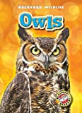 Owls, Kari Schuetz, 1600145981