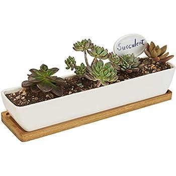 Amazon Com Succulent Planter Succulent Cactus Planter