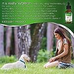 Natural ANTIBIOTICS for Dogs / ANTIBIOTICS Alternative for Pets/ Kennel Cough Medicine for Dogs / UTI Treatment / ANTIBIOTICS for Cats 16