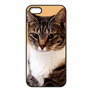 Winfors American Short Hair Cat Phone Case For iPhone 5,5S [Pattern-3]