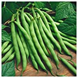 buy Everwilde Farms - 1 Lb Blue Lake Bush Green Bean Seeds - Gold Vault now, new 2019-2018 bestseller, review and Photo, best price $8.00