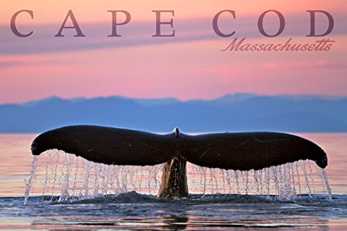 Cape Cod, Massachusetts - Humpback Whale and Sunset (16x24 Giclee Gallery Print, Wall Decor Travel Poster)