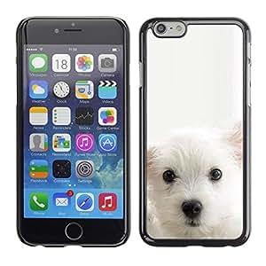 Be Good Phone Accessory // Dura Cáscara cubierta Protectora Caso Carcasa Funda de Protección para Apple Iphone 6 // Cub Puppy White Mutt Pet Muzzle Cute Dog