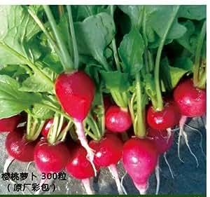 2000pc estacional semillas de plantas hortícolas, en maceta de jardín balcón, otoño siembra flores de colza, pimientos, fresas, cebollino, perejil, repollo