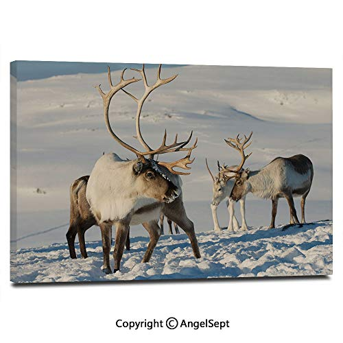 - Canvas Prints Modern Art Framed Wall Mural Reindeers in Natural Environment Tromso Northern Norway Caribou Antler Wildlife Decorative Wall Decorations for Living Room Bedroom Dining Room Bathroom of