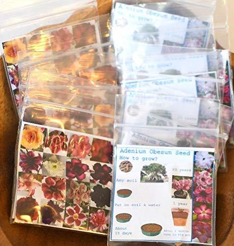 MULTI-PETAL DESERT ROSE ADENIUM SEEDS mixed colors 100 pcs by - Rose Plant Seeds Desert