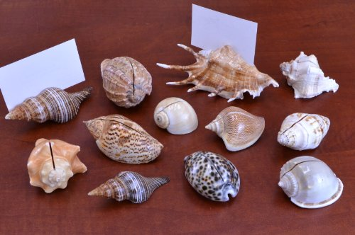 12 Pcs Natural Sea Shell Beach Card Holder Place Wedding Decor
