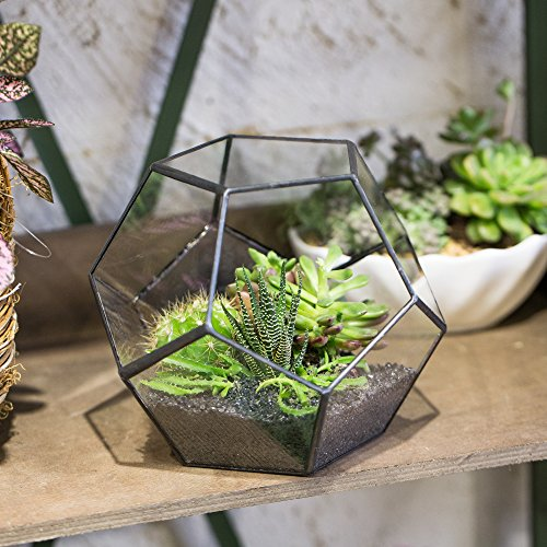 Buy terrarium containers