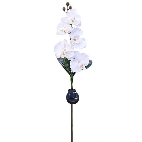 iBaste 5 Tête Solaire Led Pelouse Lampe Papillon Orchid ...