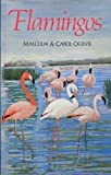 Flamingos, Malcolm A. Ogilvie and Carol Ogilvie, 0862992664