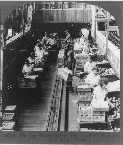Infinite Photographs Photo: Grapefruit Manatee FL 1926,Fruit Industry Bradenton