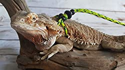 Adjustable Reptile Leash™ Harness from My Reptile Rocks
