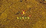 Leeve Dry Fruits Kaala Masala - 400 Gms