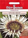 Silberdistel, Eberwurz, Carlina acaulis, ca. 25 Samen