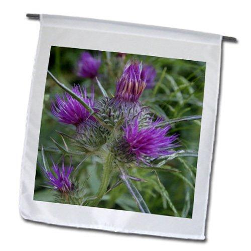 Taiche - Photography - Thistle - Thistle Flowerhead - Syrian Thistle,Notobasis syriaca, Scotland, agavanos, purple flower, Flowerhead - 18 x 27 inch Garden Flag (fl_52667_2)