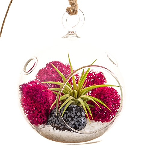 Mini Air Plant Terrarium with 3 Glass, Fuchsia Moss, White Rocks and Snowflake Obsidian