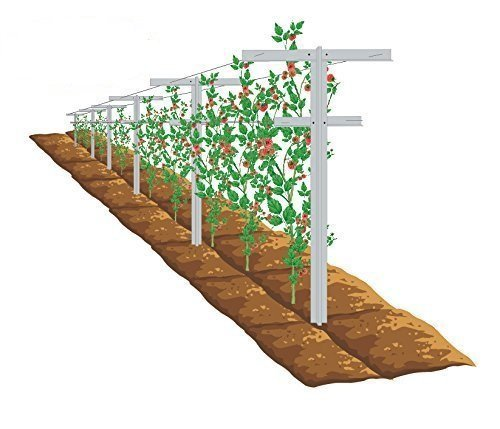 EcoTrellis, Raspberry Trellis and Stake, Vineyard Trellis, Pack of 2
