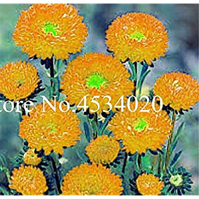 Kasuki 100 pcs Chinese Aster Bonsai (Callistephus) give You a Garden Full of Bright Summer Big Flowers Orginal Package - (Color: 16): Garden & Outdoor