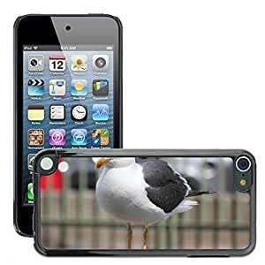 GoGoMobile Slim Protector Hard Shell Cover Case // M00124262 Seagull Bird Water Bird Seevogel // Apple ipod Touch 5 5G 5th
