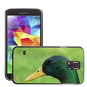 Just Phone Cases Etui Housse Coque de Protection Cover Rigide pour // M00128214 Pato Drake Bill Feather Pájaro Animal // Samsung Galaxy S5 S V SV i9600 (Not Fits S5 ACTIVE)