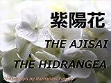 THE AJISAI  THE HYDRANGEA: THE AJISAI  THE HYDRANGER at shimodapark tokyo fuchu kyodonomori museum st mark chapel in japan (Japanese Edition)