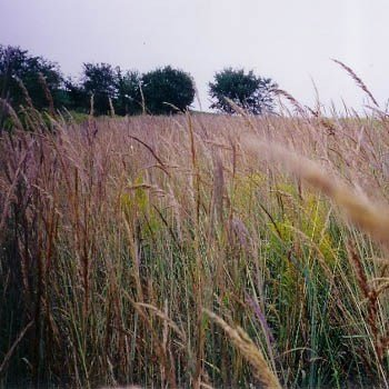 Outsidepride Tall Native Grass Seed Mix of Bluestems, Switchgrass, Indian Grass Seeds - 1 ()