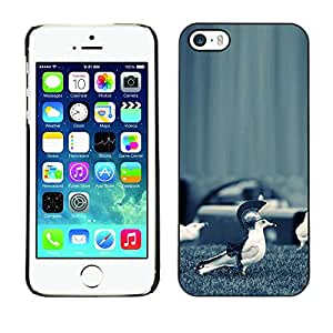 Ihec Tech / Funny Sparta Seagull Bird / Funda Case back Cover guard / for iPhone 5 / 5S