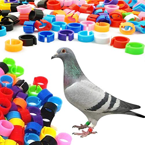 (Pmsanzay ( Pack of 100 ) 8mm Bird Rings Colorful Leg Bands for Small Chick Pigeon Parrot Finch Canary Hatch Poultry pet Rings - Reusable, Easy to Put on and Remove - no Birds)