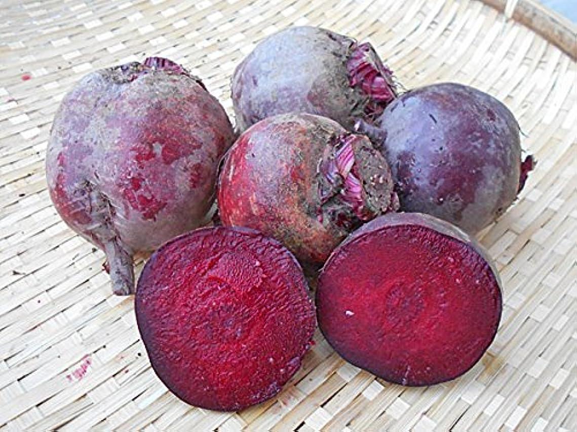 祖先髄読みやすい赤ビーツ 無農薬 8kg 北海道産