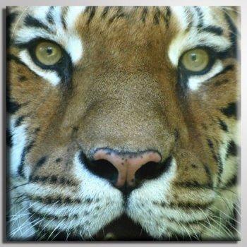 Diseño de 20 cm x 20 cm TIGER-KOPF 2 Cat robo Wild de gato
