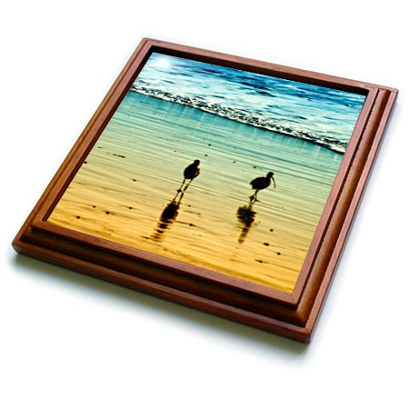3dRose trv_164741_1 Sea Birds at Sunset on a Sandy California Coastline Trivet with Ceramic Tile, 8 by 8