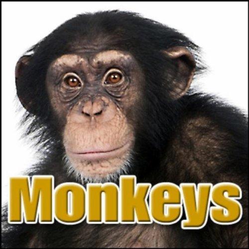 Animal, Monkey - Group of Maki Monkeys: Heavy Screaming, Primates - Monkeys, Chimps & Apes