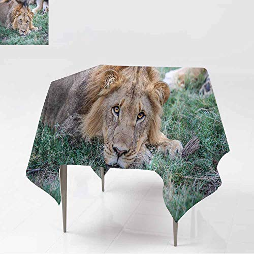 AFGG Washable Square Tablecloth,Male Lion Starring at The Camera,Dinner Picnic Table Cloth Home Decoration,70x70 Inch